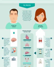 evolution job application timeline infographic infographics