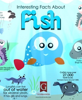 Facts about fish archives infographics for Facts about fishing