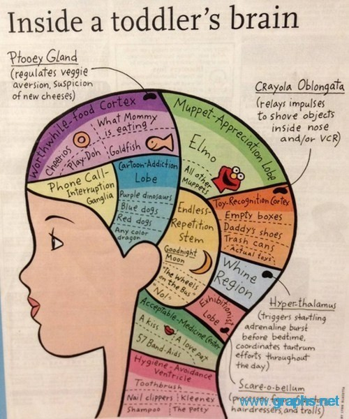 Inside a Toddler's Brain Poster