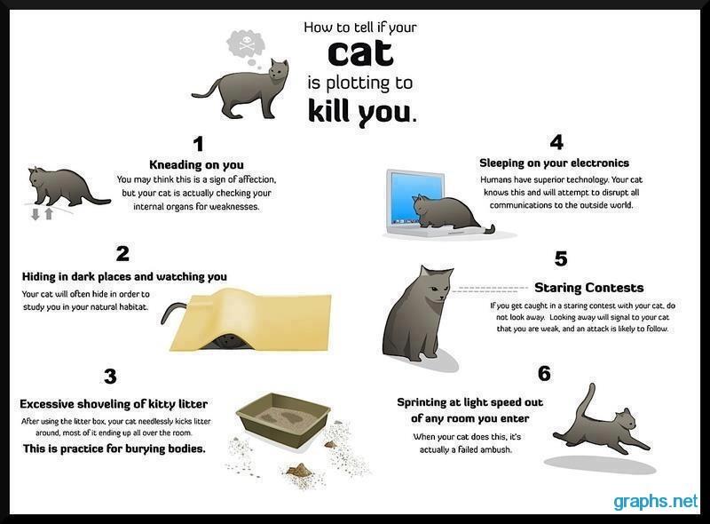 cat plotting to kill you