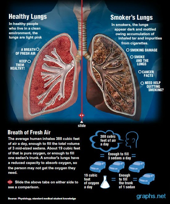 healthy lungs vs smokers lungs infographics graphs net