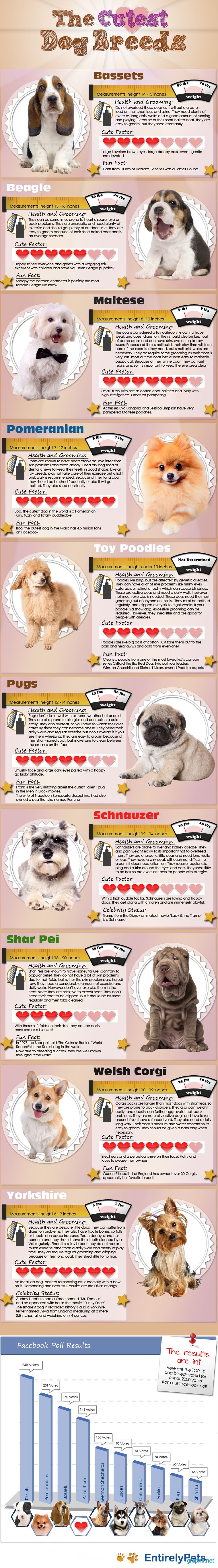 interesting facts about dog breeds