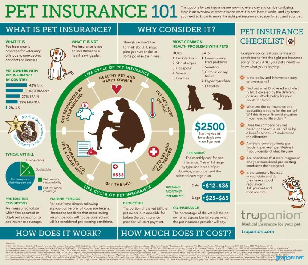 life cycle of a pet insurance