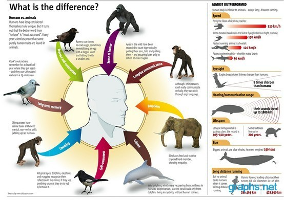 How do Animals and Humans Differ?