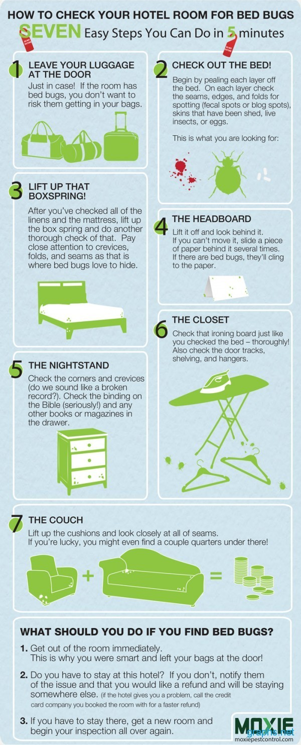 How to Find Bed Bugs in Hotel Room? - Infographics | Graphs net