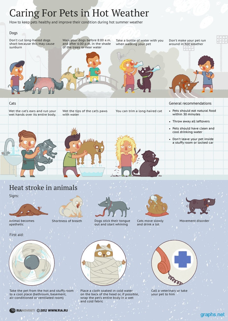 Tips for Pets in Hot Weather