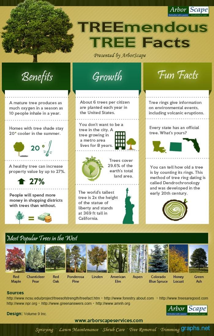 Healthy Tree Benefits