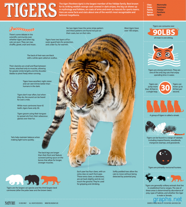 Tigers Largest Big Cats