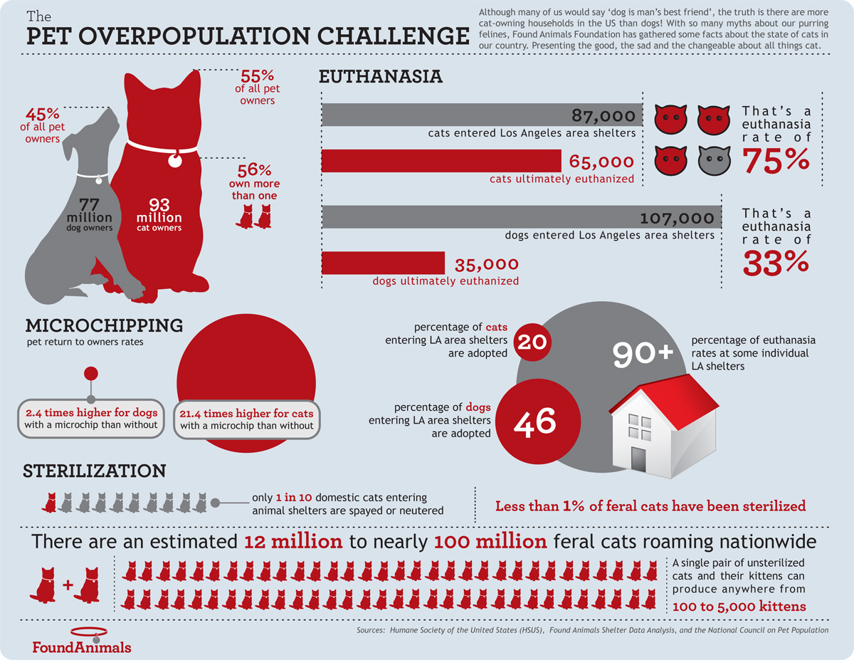 The pet overpopulation challenge