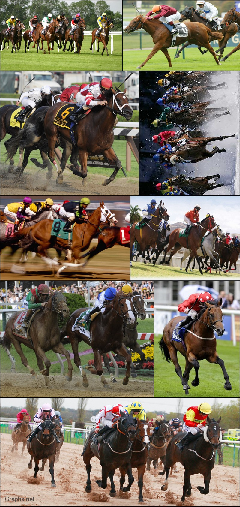Top Horse Race Pictures