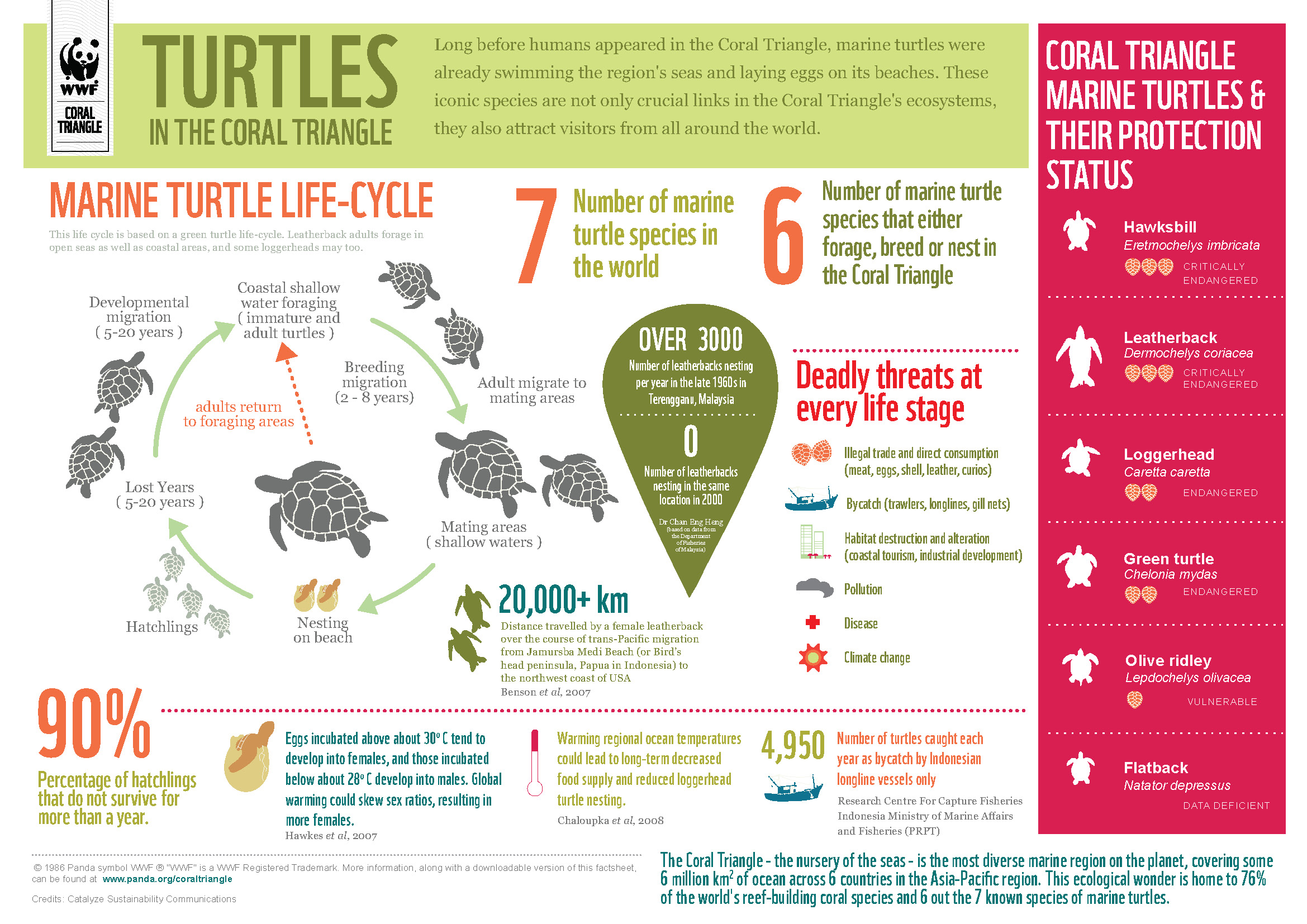 Turtles in the coral triangle
