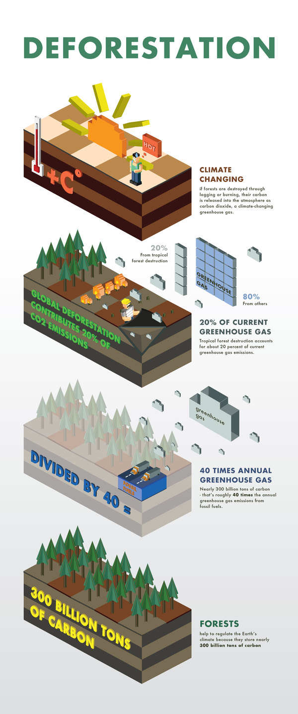 Deforestation Facts