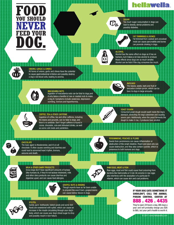 Foods To Not Feed Your Dog