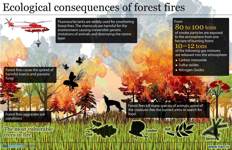 Forest Fires and their Ecological Consequences