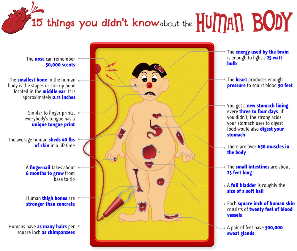 More Human body facts