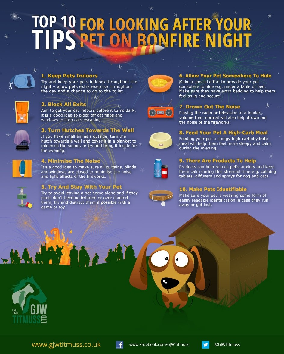 Tips to look after your pets on bonfire night