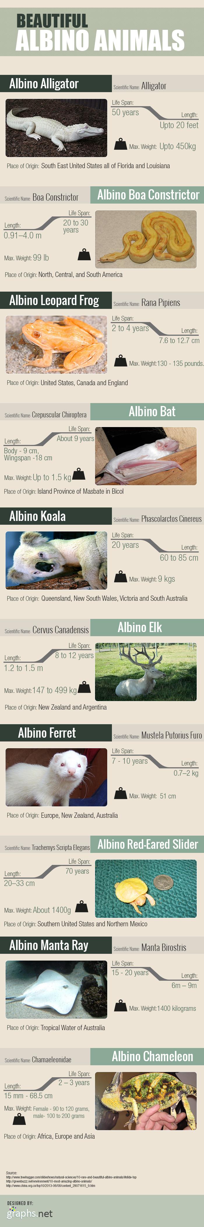 Top-10-Beautiful-Albino-Animals