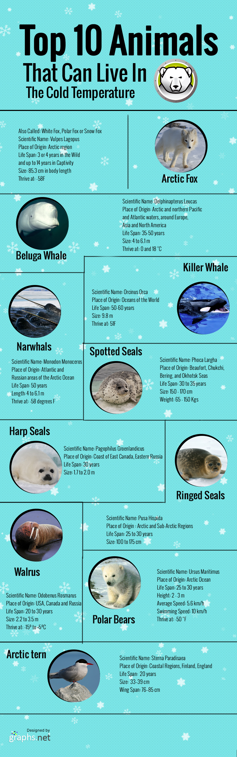 Top 10 Animals That an Live in the Cold Temperature