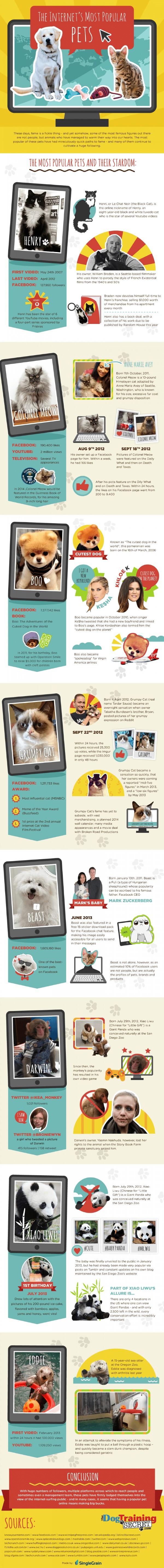 the-internets-most-popular-pets_5277fc6931b3e_w1500