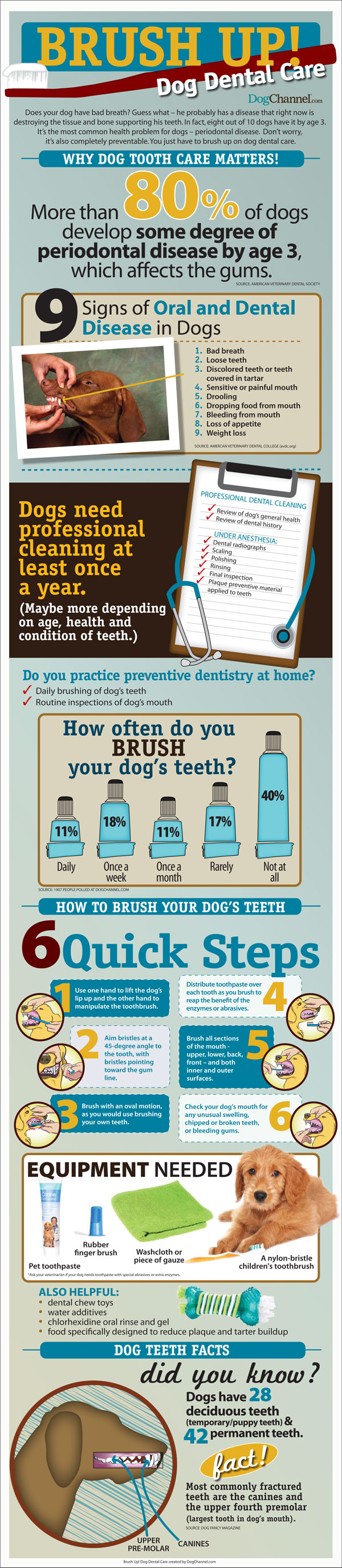 Brush up dog dental care