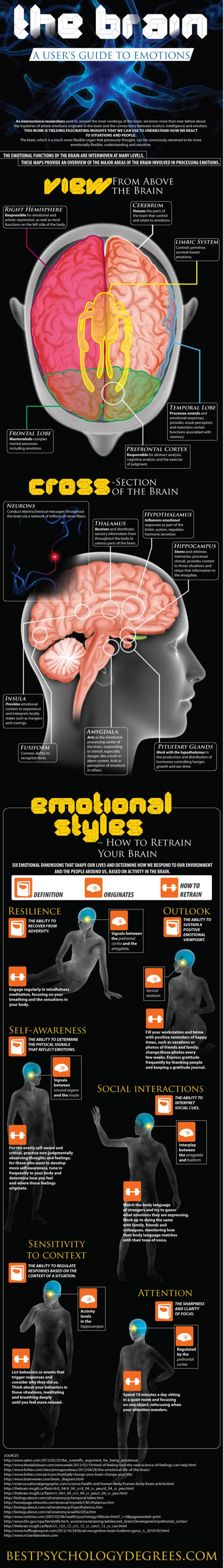 Brain Power: Your Brain And Its Emotions
