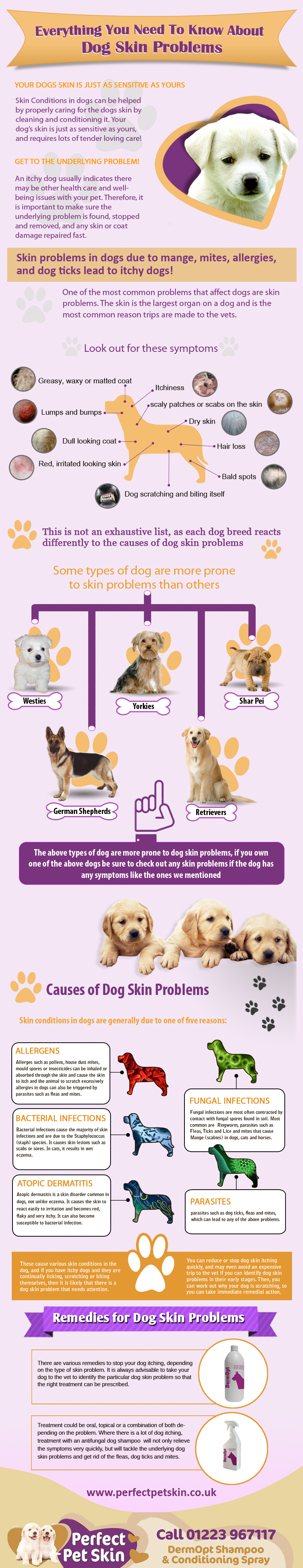 Everything you need to know about dog skin problems