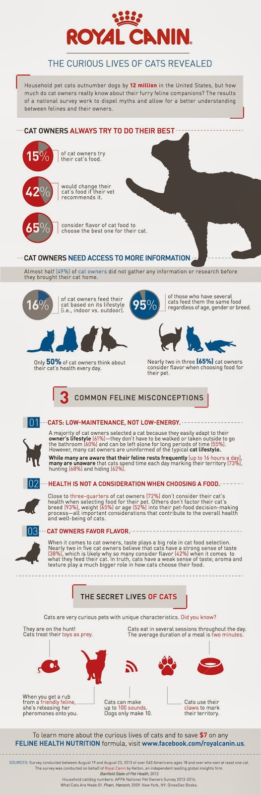 05 curious-cat-infographic-final-rev-2_259879_870_final[1](1)