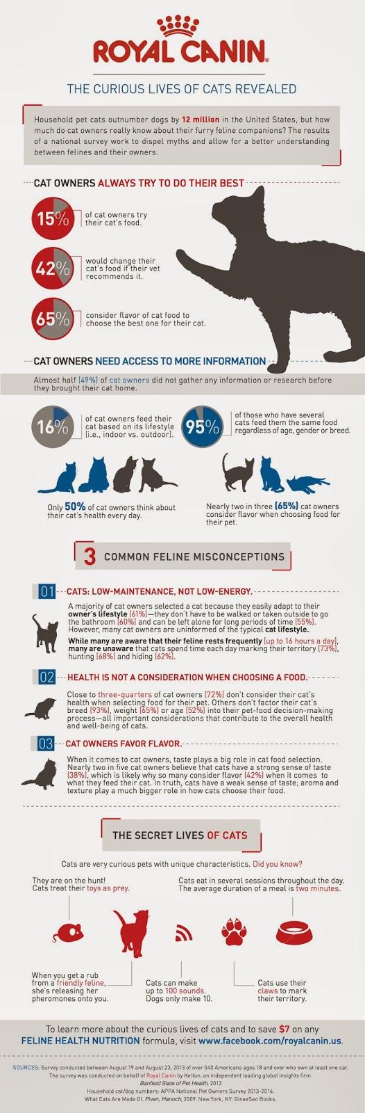 05 curious-cat-infographic-final-rev-2_259879_870_final[1](1)