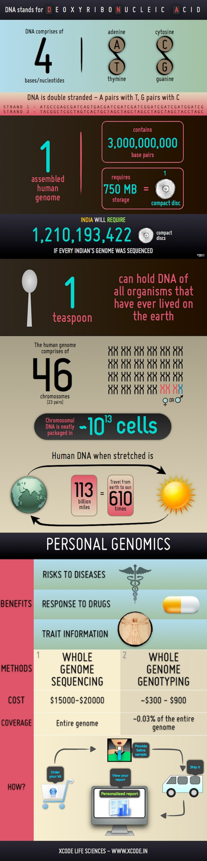DNA human genome: personal genomics