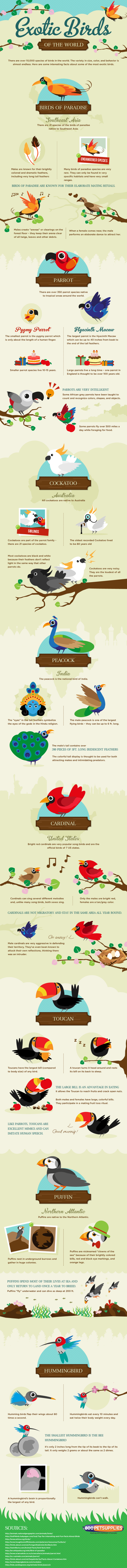18. The most exotic bird