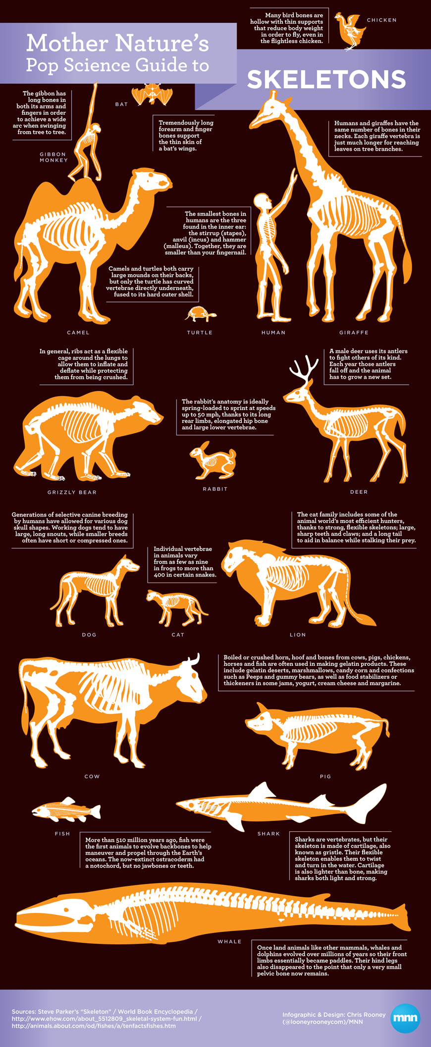 20 Awesome Infographics On Animals Infographics Graphs Net