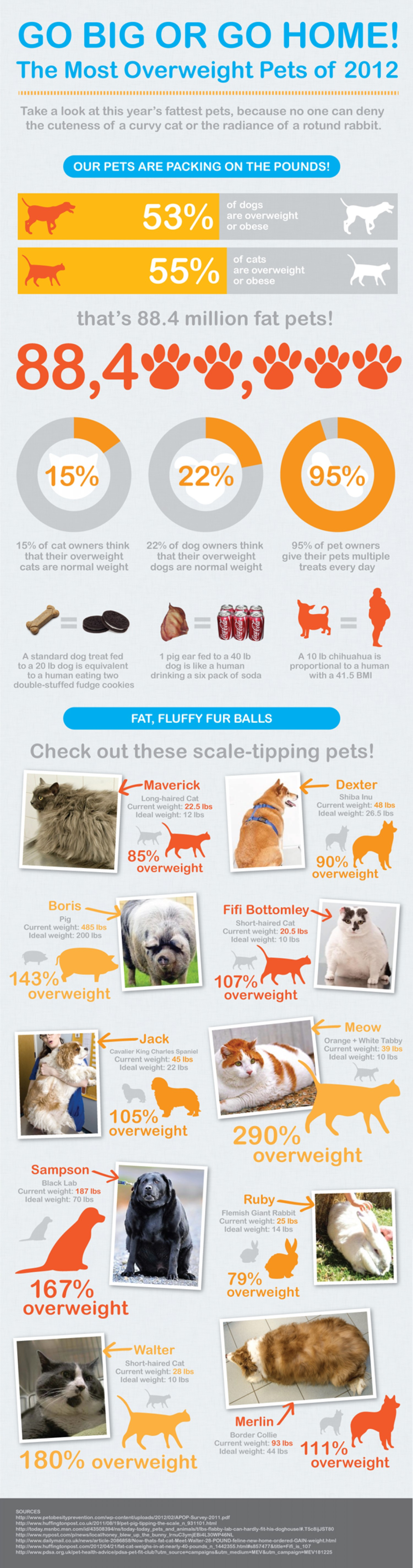 5. Pet Obesity is getting obesely ridiculous!
