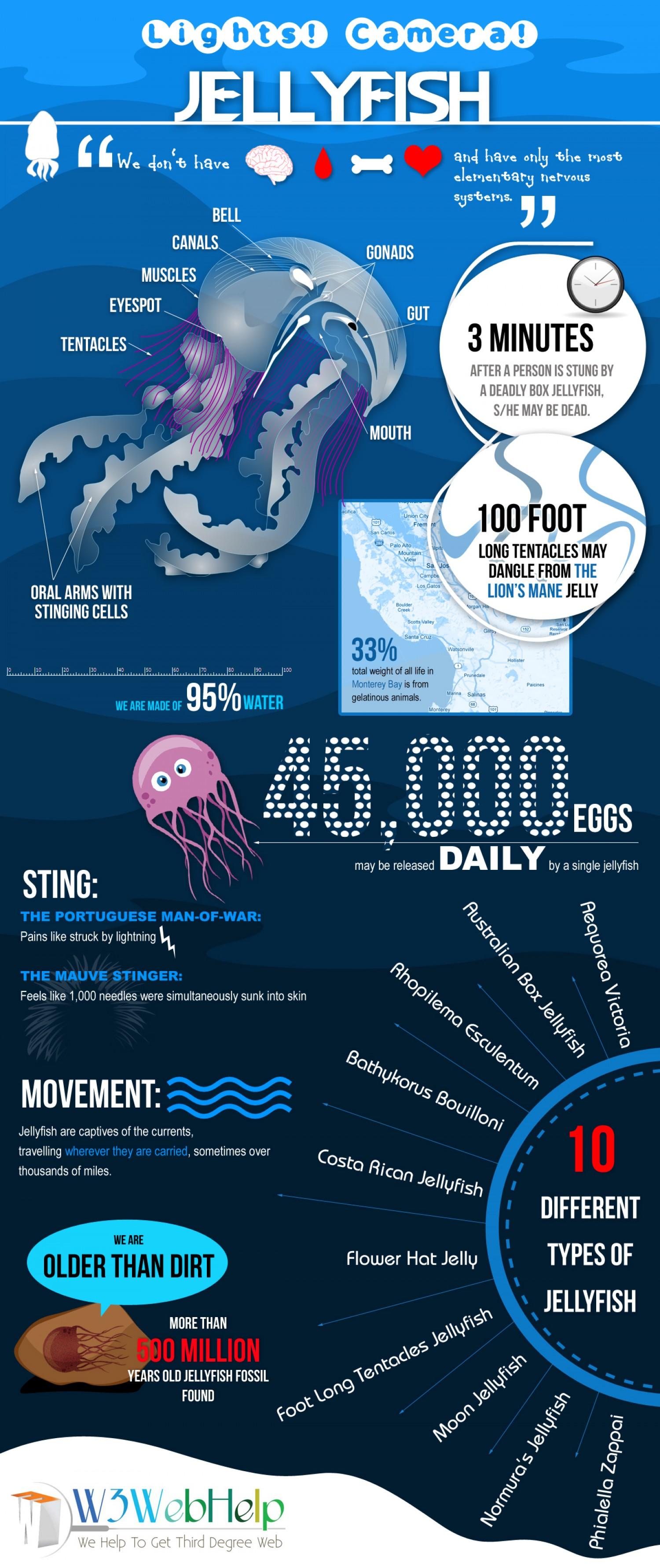 6. Jellyfish