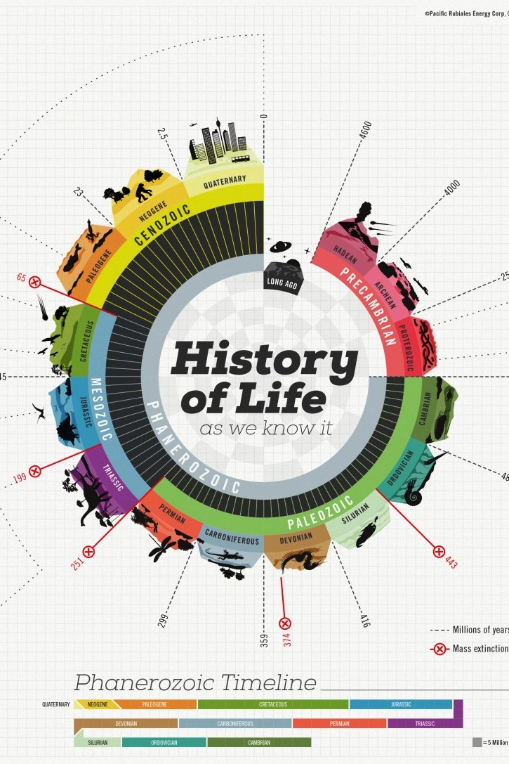 The History Of Life Infographics Graphs Net
