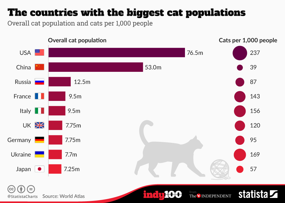 where do you find biggest cat population