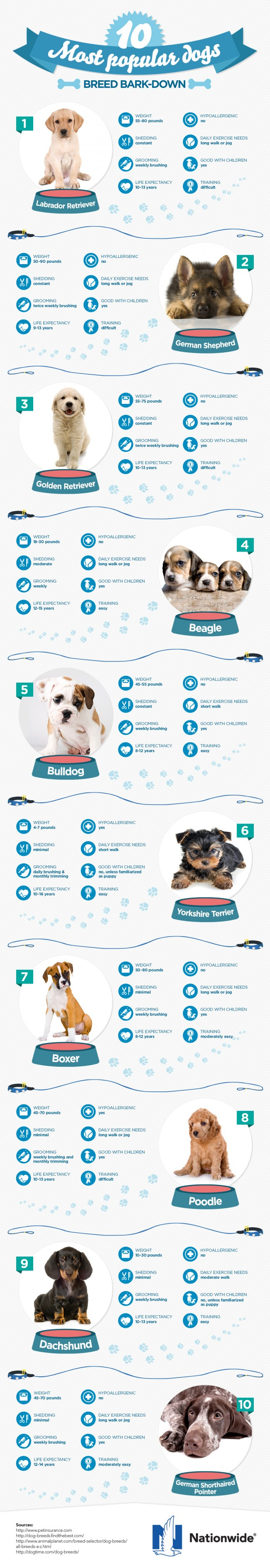 know the 10 most popular dog breeds