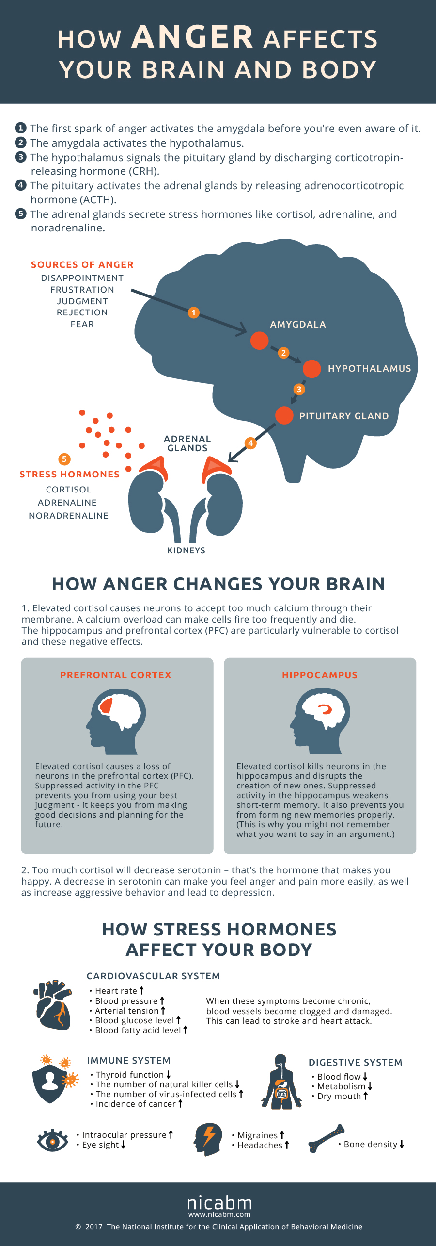 Anger Effects Infographic