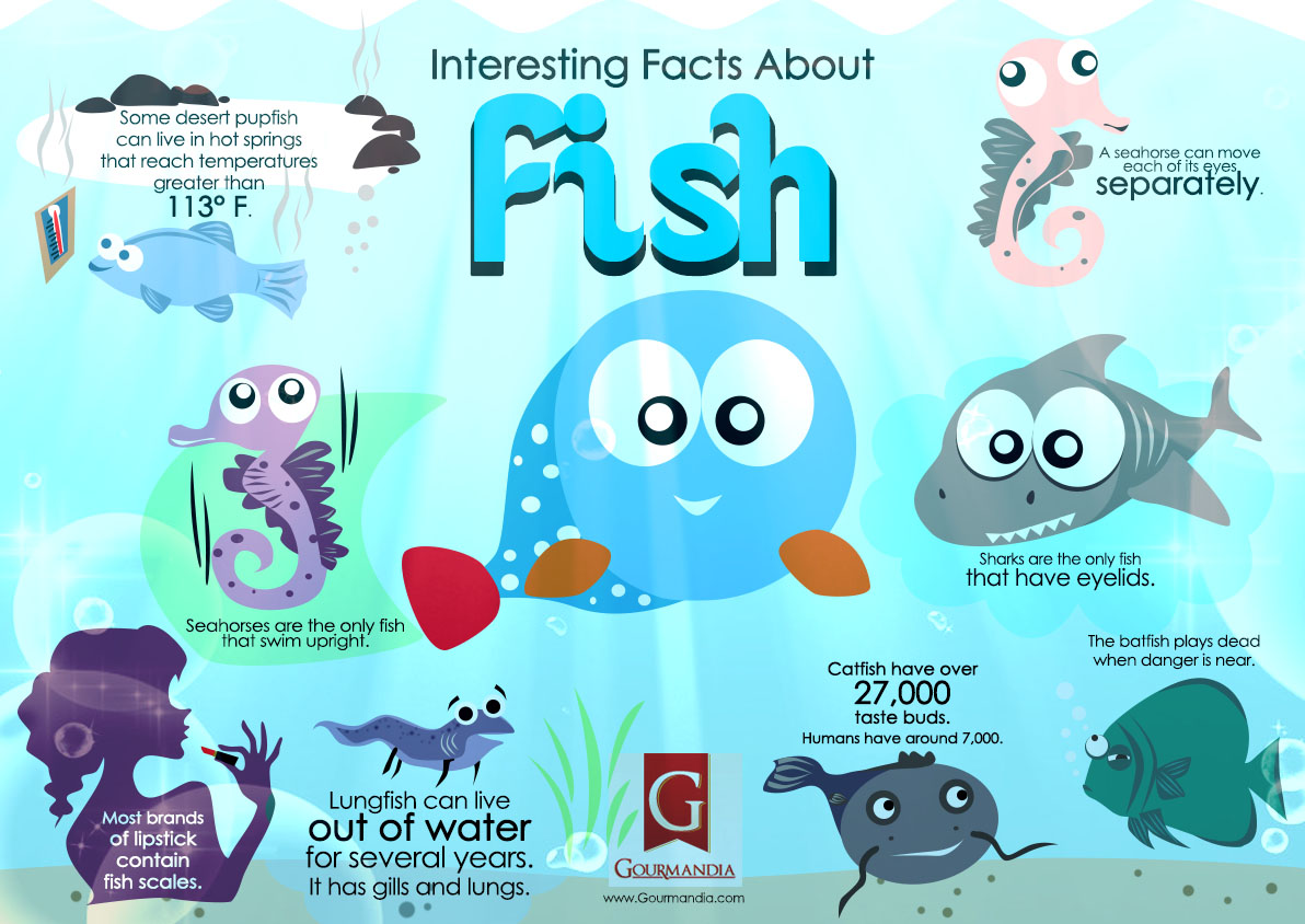 intersting Facts about fish Infographics