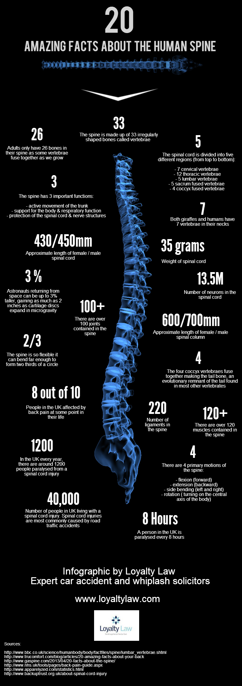 amazing facts about the spine