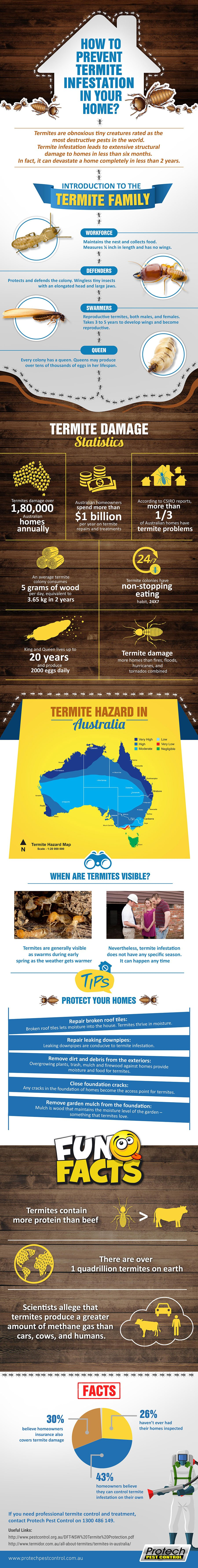 Prevent Termite Infestation Infographic