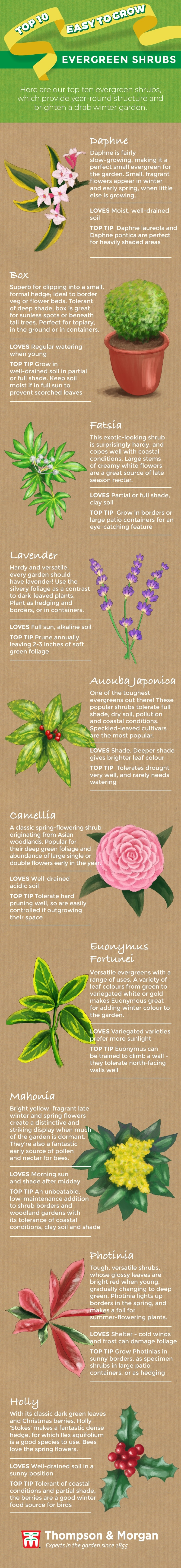 Top 10 Easy to Grow Evergreen Shrubs Infographic