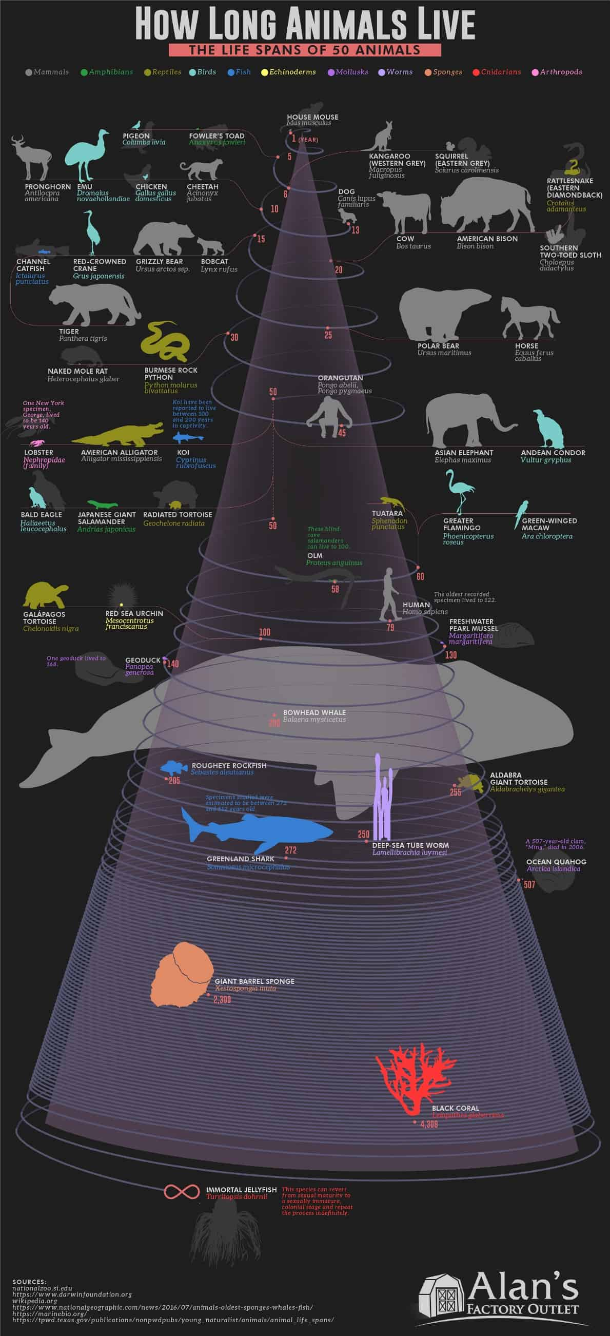 How Long Animals Live Life Spans 50 Animals
