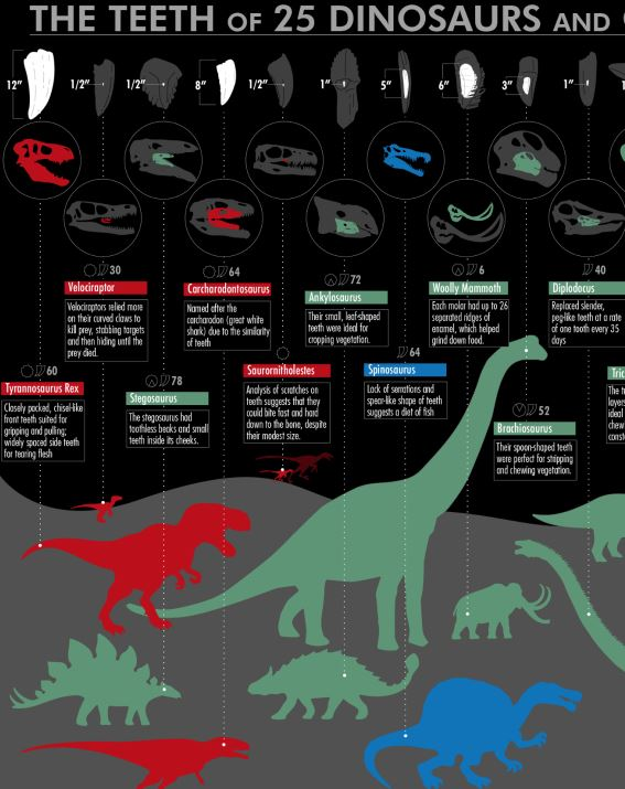 The Ultimate Dinosaur and Prehistoric Creature Teeth Chart