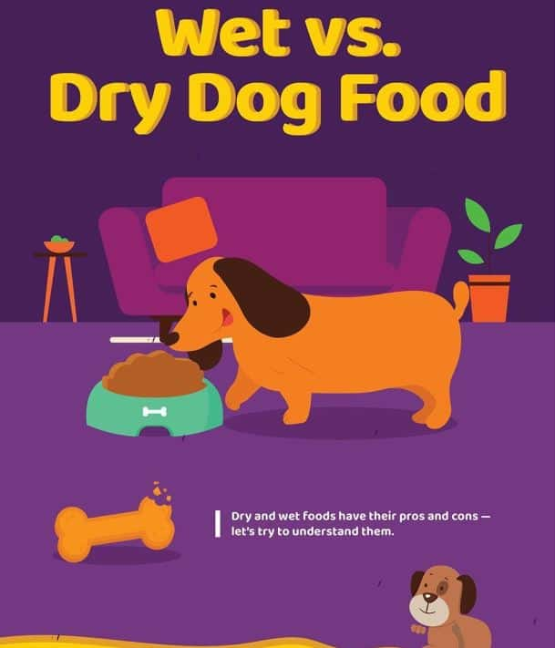 Wet vs Dry Dog Food infographic