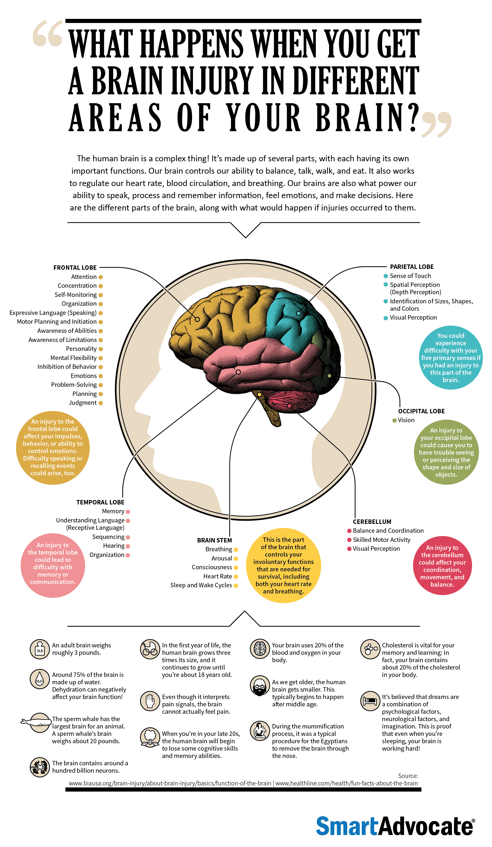 What Happens When Different Parts of Your Brain Gets Injured