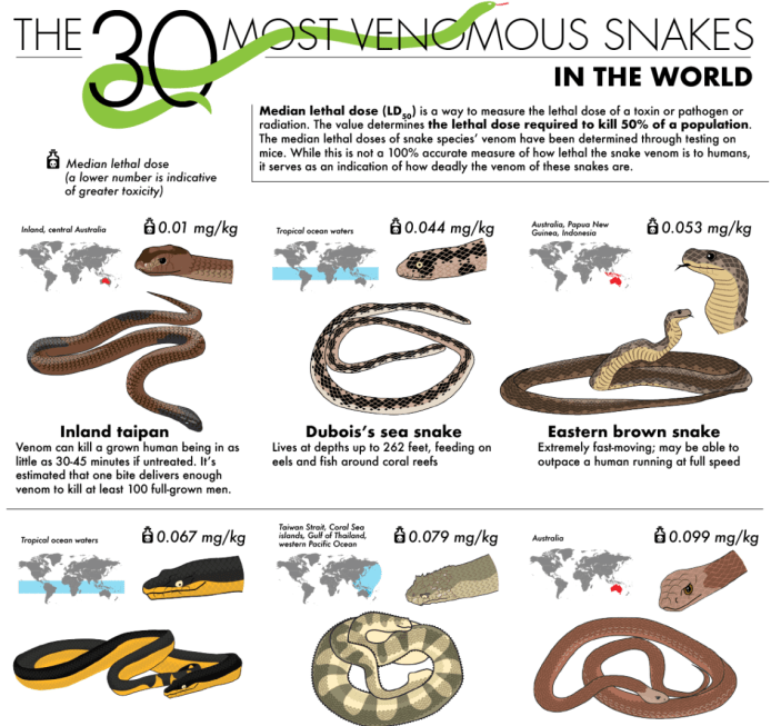 The 30 Most Venomous Snakes in the World infographic