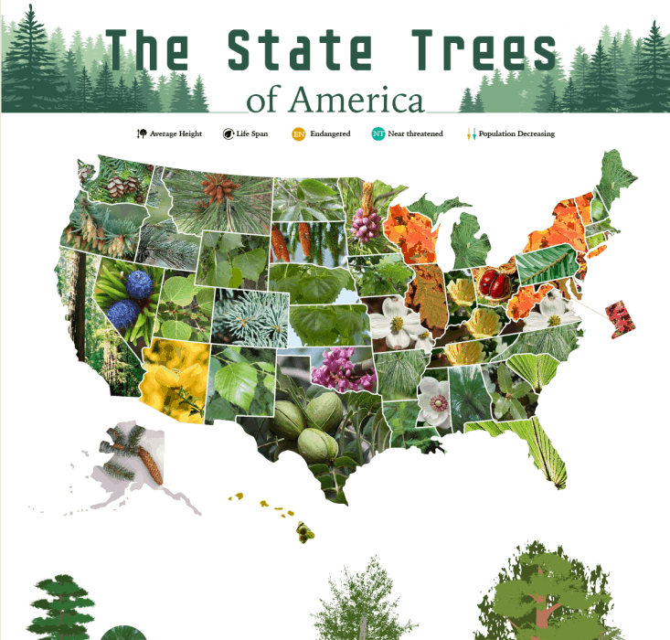 The Official State Trees of America infographic