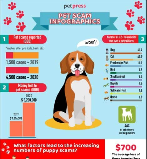 Pet scam stats infographic